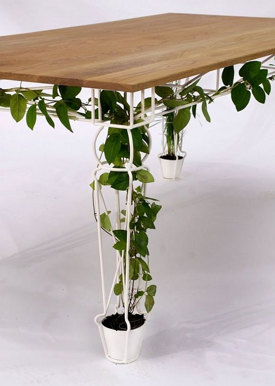 How to Grow Climbing indoor plants